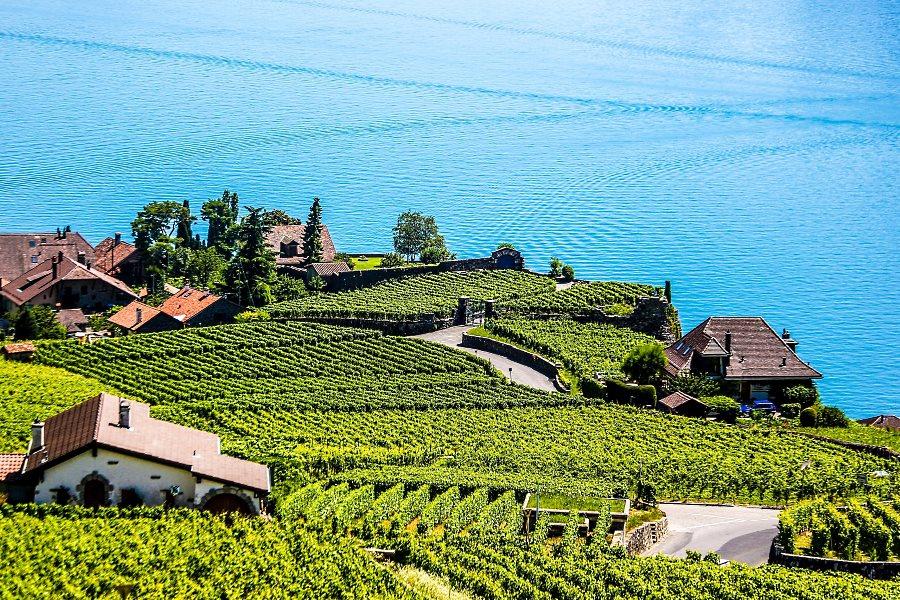 Domaine viticole pour réception de mariage